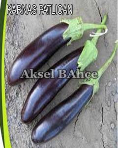25karnas patlıcan copy