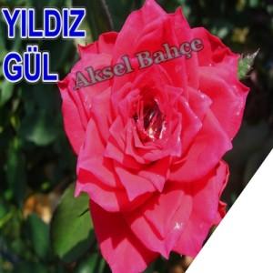 325_buyuk
