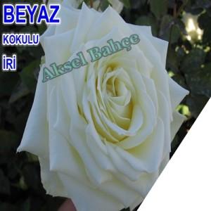 373_buyuk