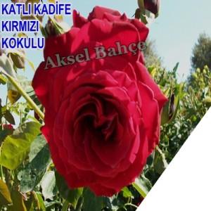 378_buyuk