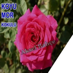 380_buyuk