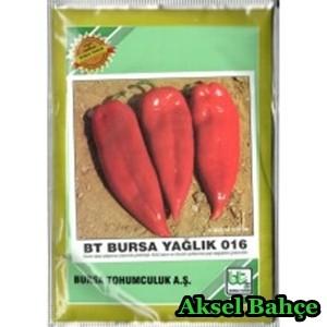 btbursayaglik25gr-228x228