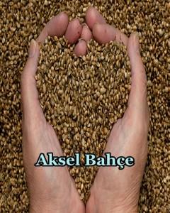 hemp-seeds-hands