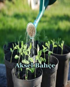 organic-seed(1)