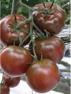 siyah domates