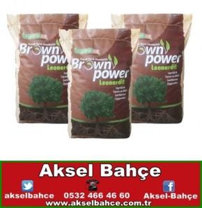 brownpower-vert