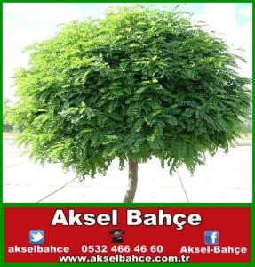 54c36eb0e487d-vert