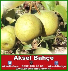 Armut_Ankara_511cacb8a59ab-vert