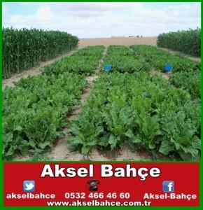 organik tarım-vert