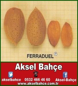 Ferraduel Badem