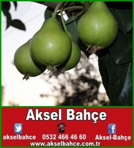 akça-vert