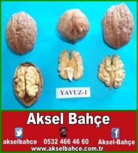 yavuz14-vert