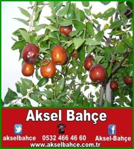 a9ae420aa865584c181c0bc148e0ca9a-vert
