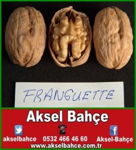 ceviz_franquette-vert