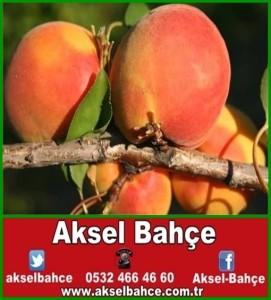 Bahce_2885821-vert