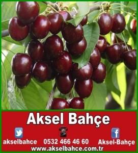 Bahce_2885852-vert