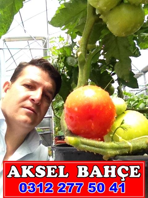 sizde saksıda sebzelerinizi yetiştirebilirsiniz arayın yardımcı olalım
